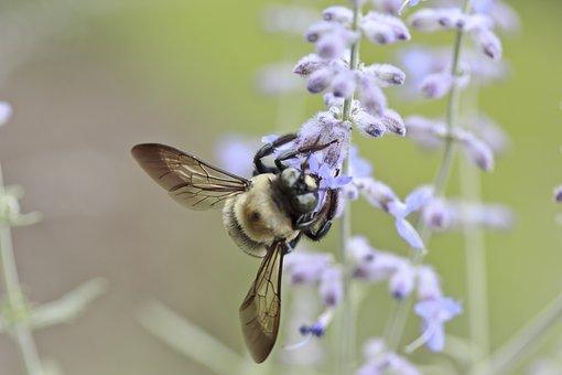 Kalendarz pylenia a skuteczne leczenie alergii